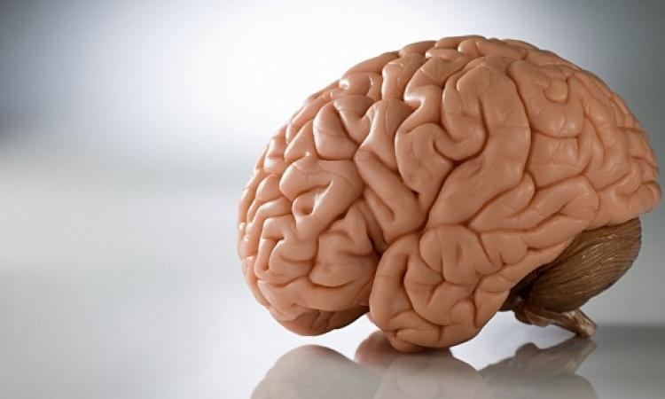 """علماء يكتشفون """"أنابيب"""" فى الدماغ تخلصه من السموم"""