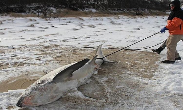 موجة برد قارس تضرب كندا تقتل أسماك القرش وتهدد البطاريق
