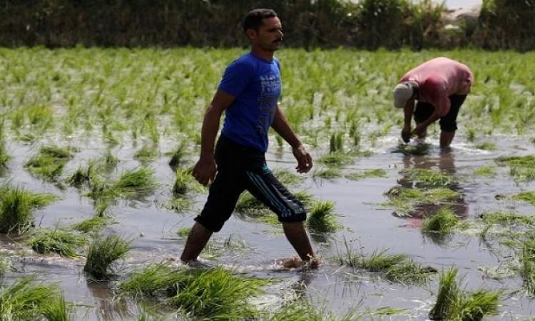 حظر زراعة المحاصيل الشرهة للمياه .. ماذا بعد ؟