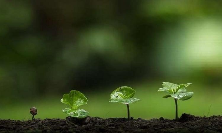 النباتات تستخدم اتصالات سرية لدعم نمو جاراتها