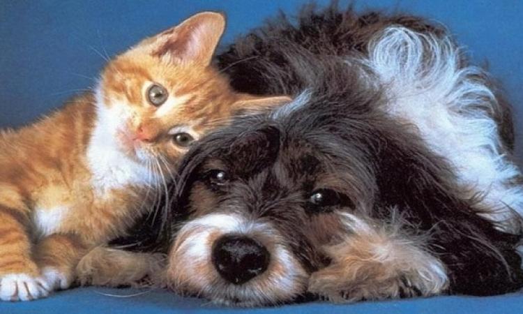 تحذير خطير لهواة اقتناء الكلاب والقطط