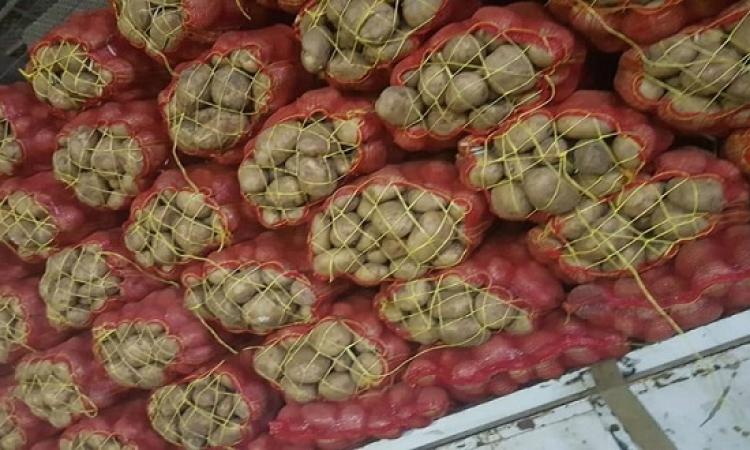 حماية المنافسة يشكل فريق عمل لدراسة أزمة البطاطس