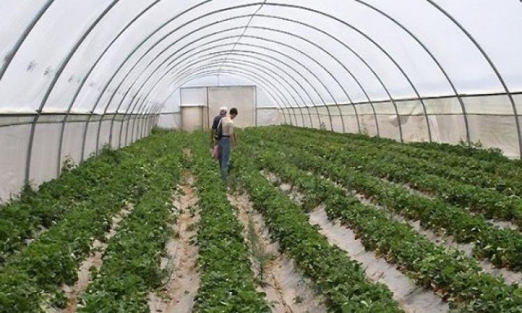 السيسى يفتتح اليوم 7100 صوبة زراعية بالعاشر من رمضان