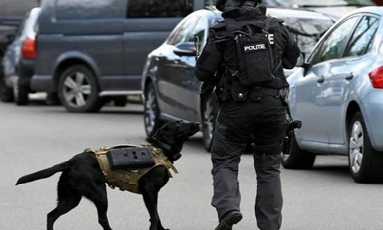 """""""لابرادور"""" بسترة واقية.. كلاب الشرطة الهولندية تلفت الأنظار"""