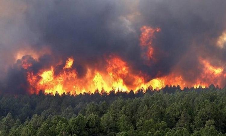 ارتفاع قتلى حرائق الغابات بالجزائر إلى 42 شخصاً بينهم 25 جندياً