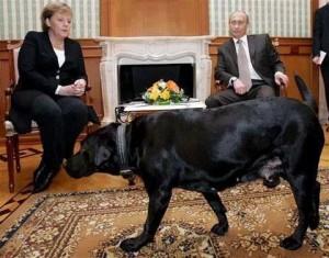 كلب 2