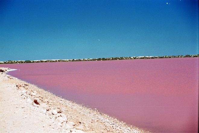 البحيرة الوردية (2)