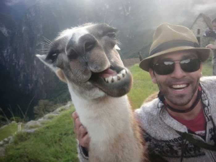 funny-animal-selfie-001