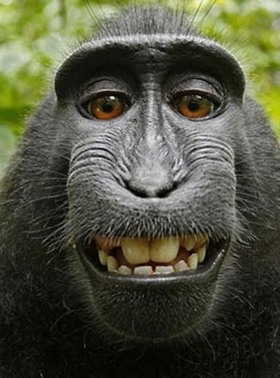 macaque3_2749855k (1)