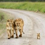 الامومة في عالم الحيوان