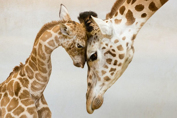 الامومة في عالم الحيوان 8