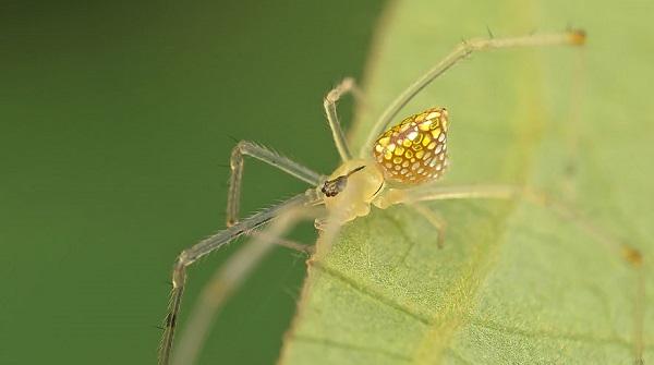 عناكب زجاجية  2