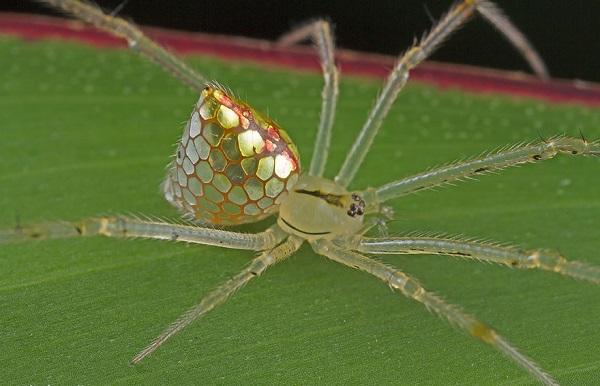 عناكب زجاجية 3