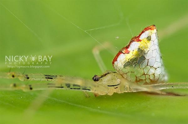 عناكب زجاجية  5