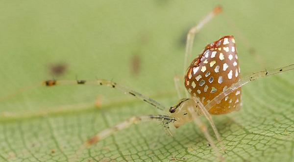 عناكب زجاجية  7