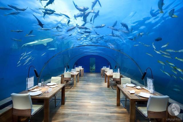 مطاعم غريبة 12