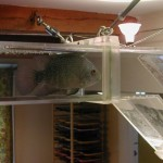 احواض سمك  15