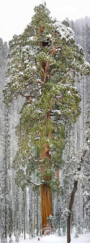 اروع الاشجار  12