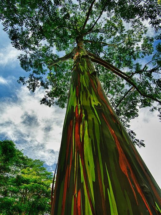 اروع الاشجار  14