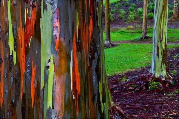 اروع الاشجار  15