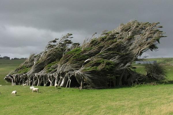 اروع الاشجار  3