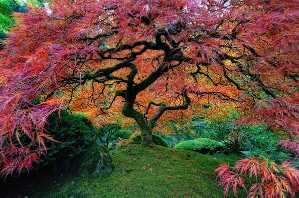 اروع الاشجار  4