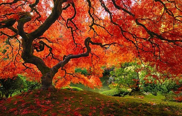 اروع الاشجار  5