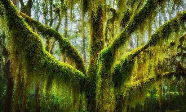 اروع الاشجار  6