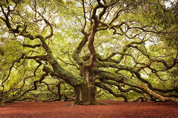اروع الاشجار  9