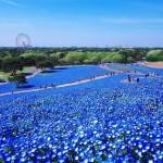 حديقة هيتاشى اليابانية
