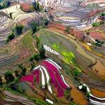 حقول الارز في الصين