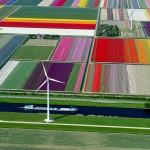 حقول التيوليب هولندا