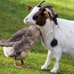 حيوانات طريفة  14