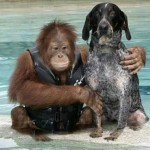 صداقة الحيوانات  11
