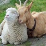 صداقة الحيوانات  12
