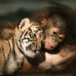صداقة الحيوانات 13