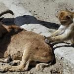 صداقة الحيوانات  14