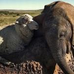 صداقة الحيوانات  15
