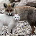 صداقة الحيوانات