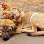 صداقة الحيوانات  18