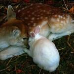 صداقة الحيوانات  19