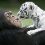 صداقة الحيوانات  2