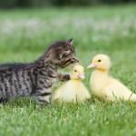 صداقة الحيوانات  20