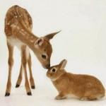 صداقة الحيوانات 21