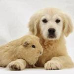 صداقة الحيوانات 22