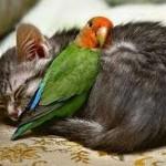 صداقة الحيوانات  4