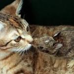 صداقة الحيوانات  5
