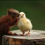 صداقة الحيوانات  6