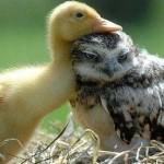 صداقة الحيوانات  7