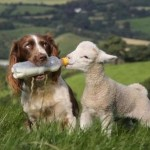 صداقة الحيوانات  8